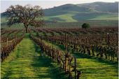 Livermore Winery - photo