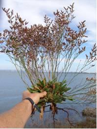 Shoreline Habitat Restoration
