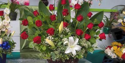 Daily Fresh Roses