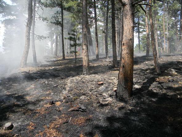 Tree strike