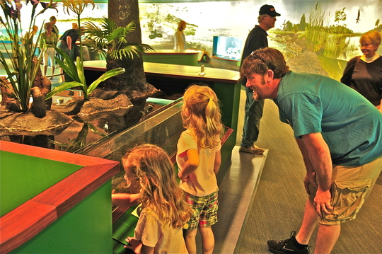 Kids learn at a newly opened exhibit at ANERR.