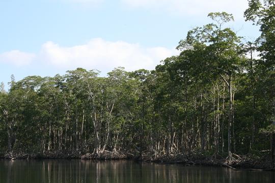 Oleta River State Park mangroves