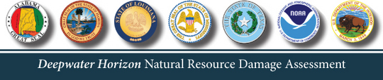 Deepwater Horizon Natural Resource Damage Assessment