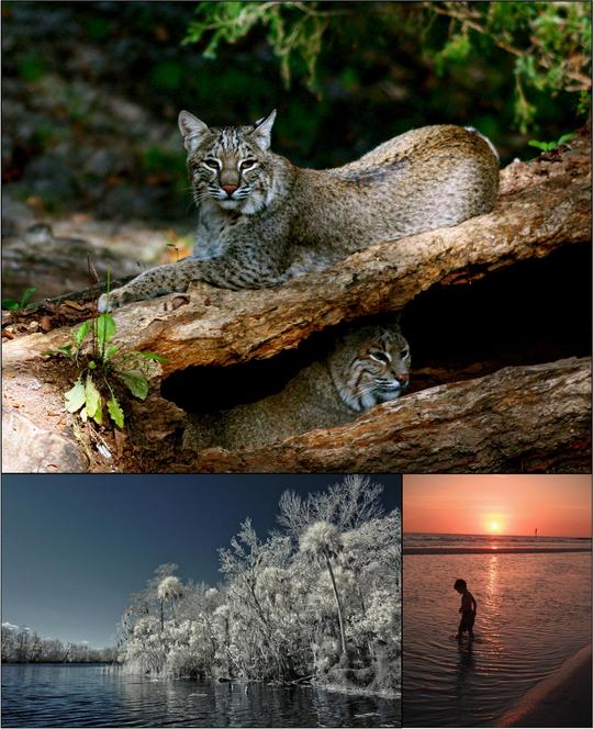 2011 PHOTO CONTEST WINNERS