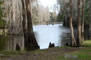 Shingle Creek scene