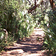 Hiking Trail at Little Talbot Island State Park