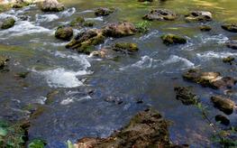 shoals in Hillsborough River State Park, by Doug Alderson