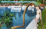 vintage postcard photo of Silver Springs