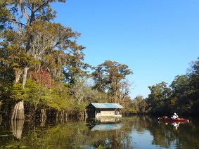 Choctawhatchee River paddler, by Liz Sparks