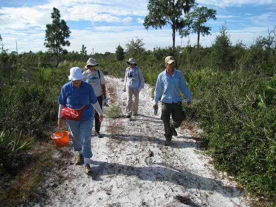 Ridge Rangers and FWC Staff search for ripe acorns along a firebreak