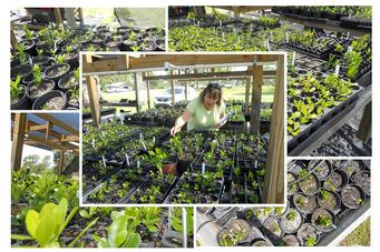Inventory of Scrub Oaks in Native Plant Nursery