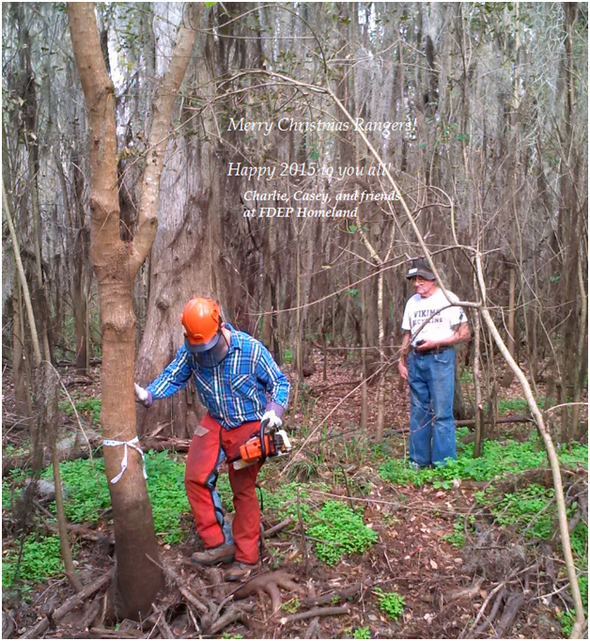 Ridge Rangers cut down and GPS mark an invasive chinese tallow tree