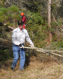 Ridge Rangers remove sand pines