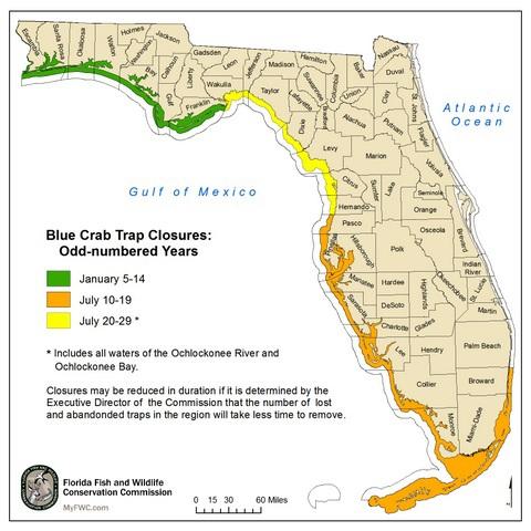 Big Bend Florida blue crab trap closure starts July 20th ………