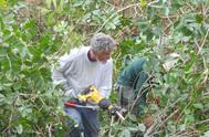Ridge Ranger Cuts Down Invasive Plants
