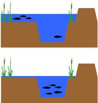 Marsh water levels