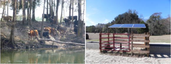 Left: Cows access riparian zone and Right: Solar-powered well