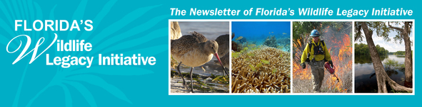 FWLI_Newsletter_Banner