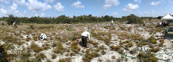Panoramic of Ridge Rangers Planting