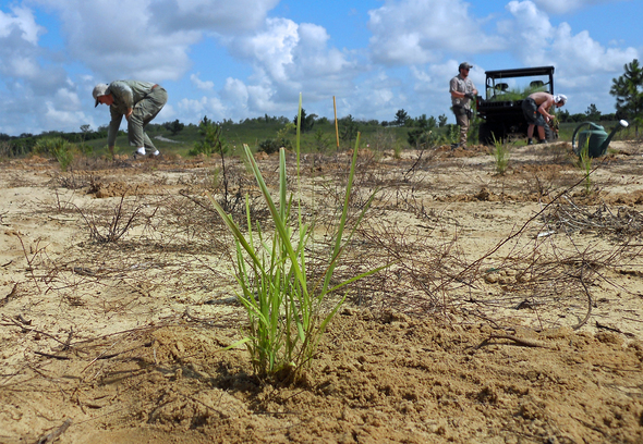 Planting Native Grasses at Bok Tower Garden