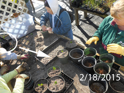 Ridge Rangers Repotting