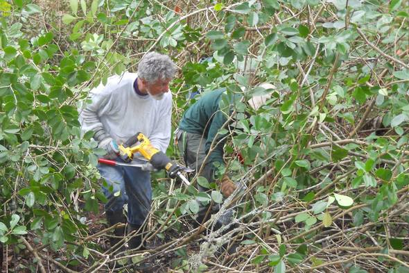 Ridge Ranger Removes Invasive Trees
