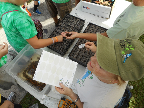 Ridge Rangers help Festival Attendees Pot Acorns