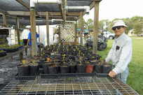 Ridge Rangers in Native Plant Nursery