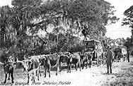 Wagons Hauling Citrus