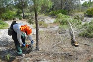 Ridge Ranger Cuts Down Sand Pines