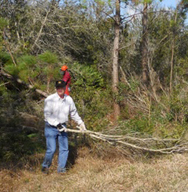 Cutting Down Sand Pines