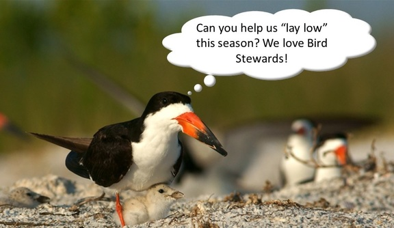 Bird Steward