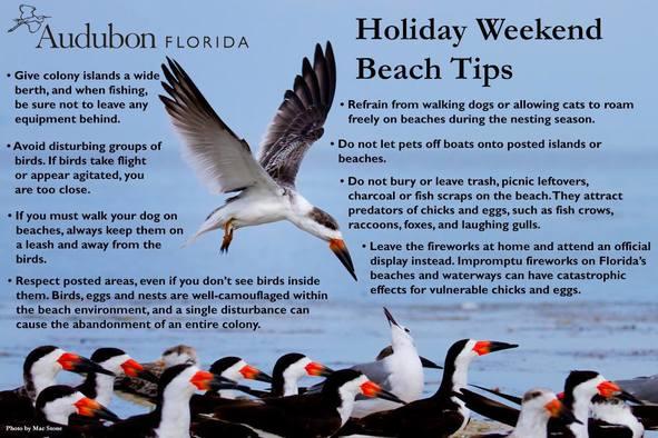 Audubon Florida Tips for Holidays at the Beach