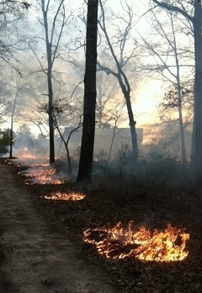 Image: Prescribed fire