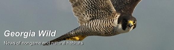 Image: Ga. Wild masthead/peregrine falcon