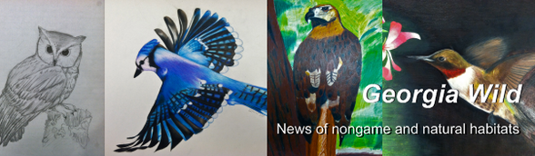 Georgia Wild 4/17 masthead: bird art images