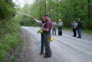 Image: Tracking bats