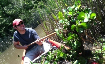 Image: Removing water hyacinth