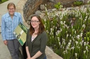 Pitcherplant bog garden