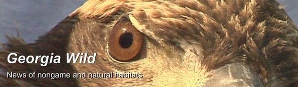 Masthead -- bald eagle (credit: WALB-TV/Albany, Ga.)
