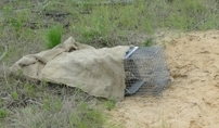 Gopher tortoise trap