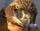 WALB-TV eagle clip