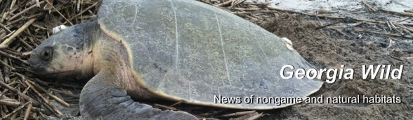 Kemps ridley: E-news masthead