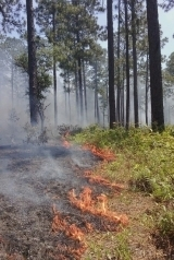 Silver Lake prescribed fire