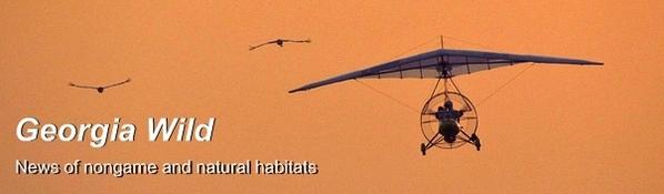 Ga. Wild masthead: Whooping cranes flight