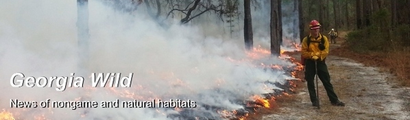 Georgia Wild masthead: Rx fire