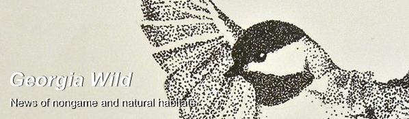 Ga. Wild masthead: Chickadee art