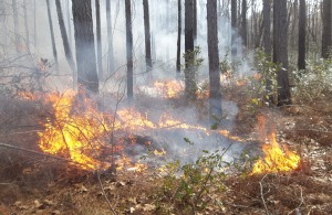 Prescribed fire at work
