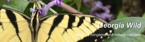 Georgia Wild masthead: Tiger swallowtail