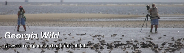 Ga. Wild masthead: shorebird survey